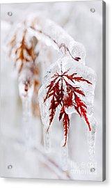 Icy Winter Leaf Acrylic Print by Elena Elisseeva