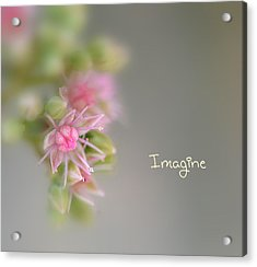 Imagine Now Acrylic Print