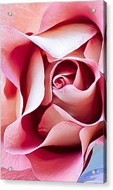In Depths Of A Rose Acrylic Print by Elvira Pinkhas