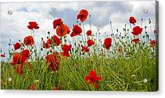 In Flanders Fields Acrylic Print
