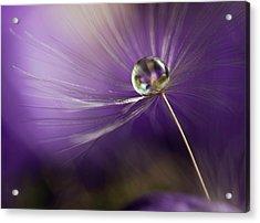 In Shades Of Purple Acrylic Print