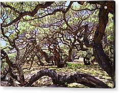 In The Depth Of Enchanting Forest Acrylic Print by Jenny Rainbow