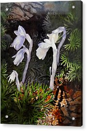 Indian Pipes Acrylic Print by Enola McClincey