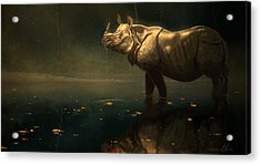 Indian Rhino Acrylic Print by Aaron Blaise