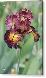 Iris Flower Acrylic Print