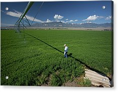 Irrigation Boom And Farmer With Alfalfa Acrylic Print by Jim West