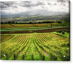 Italy, Tuscany, Autumn Vineyards Acrylic Print