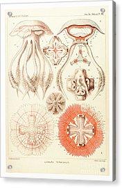 Jelly Fish, Artwork Acrylic Print