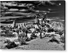Acrylic Print featuring the photograph Joshua Tree Black And White by Benjamin Yeager