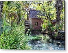 Juniper Springs Acrylic Print by Bob Jackson