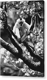 Just Hanging Out Acrylic Print by Retro Images Archive
