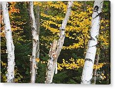Kancamagus Highway - White Mountains New Hampshire Acrylic Print