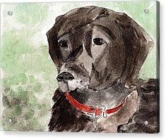 Labrador Retriever Acrylic Print by Elizabeth Briggs