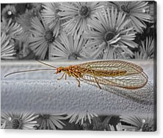 Lacewing Helps In The Garden 2 Acrylic Print by Henry Kowalski