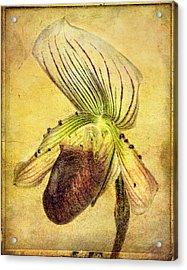 Lady Slipper Orchid Acrylic Print by Robert Jensen