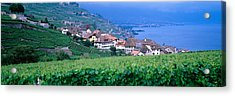 Lake Of Geneva, Vineyards, Rivaz Acrylic Print by Panoramic Images