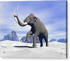 Large Mammoth Walking Slowly Acrylic Print