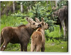 Lean On Me Acrylic Print by Ted Raynor