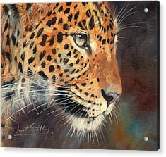 Leopard Acrylic Print by David Stribbling