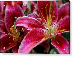 Lily Bee Acrylic Print