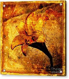 Lily Acrylic Print by Bernard Jaubert