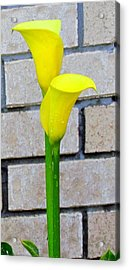Lily Flower  Acrylic Print by Joyce Woodhouse