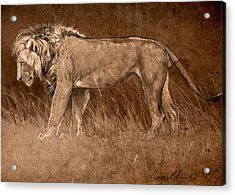 Acrylic Print featuring the digital art Lion Sketch by Aaron Blaise
