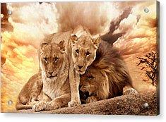 Lions Acrylic Print by Christine Sponchia