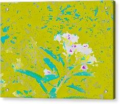 Little Flowers Acrylic Print