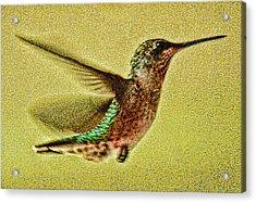 Little Wings Acrylic Print by Joe Bledsoe
