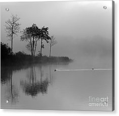 Loch Ard Trees In The Morning Mist Acrylic Print