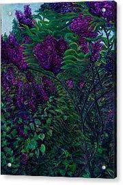 Lois Loves Lilacs Acrylic Print