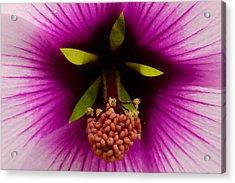 Sweet Nectar Acrylic Print by Lon Goudey