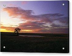 Lone Tree Pond Acrylic Print