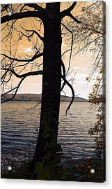 Lonely Tree   Acrylic Print by Mark Ashkenazi