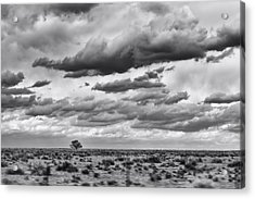 Lonesome Tree Bw Acrylic Print by Alan Tonnesen