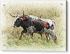 Acrylic Print featuring the photograph Longhorn Bull - A Strong Portrait by Bill Kesler