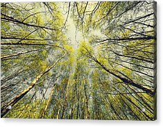 Looking Up Acrylic Print by Svetlana Sewell