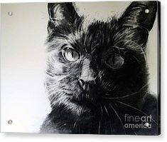 Love Acrylic Print by Valerie  Bruzzi