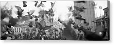 Low Angle View Of A Flock Of Pigeons Acrylic Print