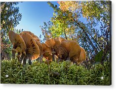 Low Wide Angle View Of Mushrooms Acrylic Print