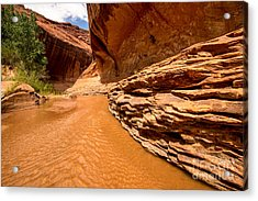 Lower Coyote Gulch - Utah Acrylic Print