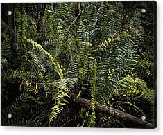 Loxahatchee Refuge-4 Acrylic Print by Rudy Umans