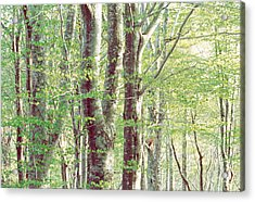 Lush Forest Acrylic Print