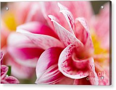 Acrylic Print featuring the photograph Macro Image Of A Pink Flower by Nick  Biemans