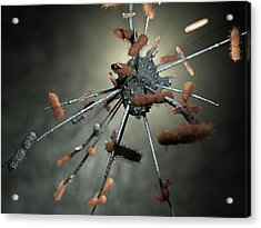 Macrophage Engulfing Bacteria Acrylic Print