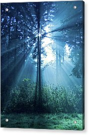Magical Light Acrylic Print by Daniel Csoka