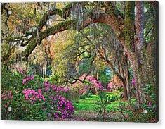 Magnolia Plantation Azaleas Acrylic Print
