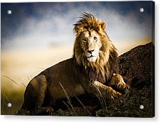Majestic Male On Mound Acrylic Print