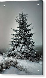 Majestic Winter Acrylic Print by Heather  Rivet